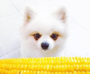 """f8c1672ef721 10 """"ανθρώπινες"""" τροφές για σκύλους"""